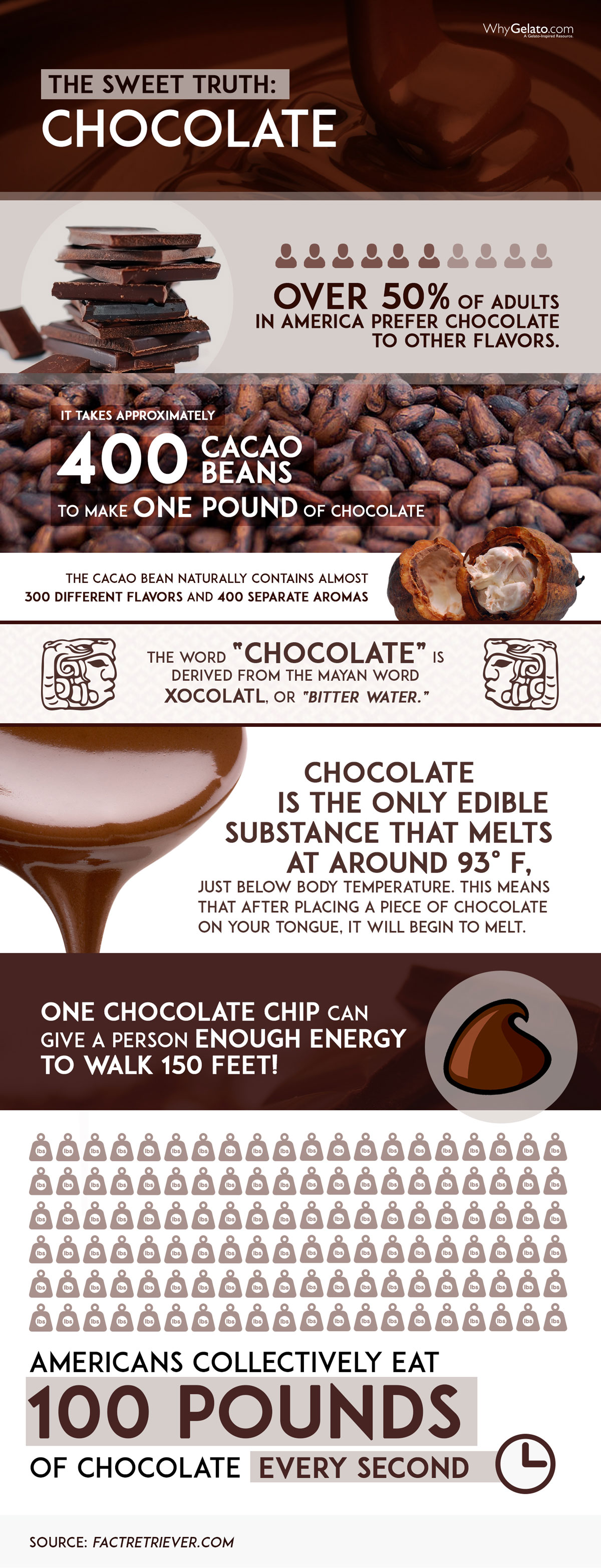 Chocolate Infographic Large